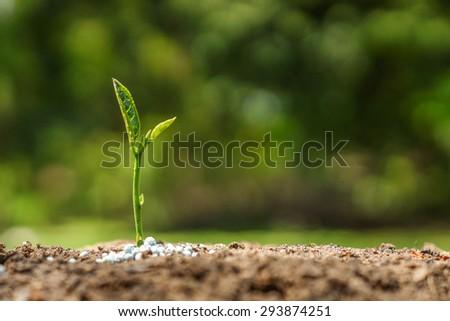 plant seedling growing on fertile soil with fertilizer / baby plant