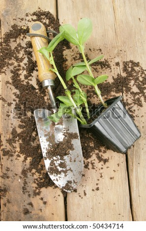 Plant seedling trowel and soil on a potting bench