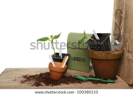Plant seedlings and garden tools on a wooden potting bench against a white background