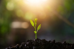Plant,Seedlings grow in soil with sun light. Planting trees to reduce global warming.