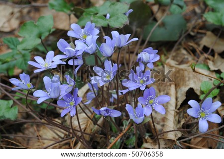 Blue Plant Names Plant Snowdrop With Skyl Blue