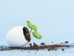 Plant sprout in eggshell on a blue background. Ecological organic product, plant cultivation.