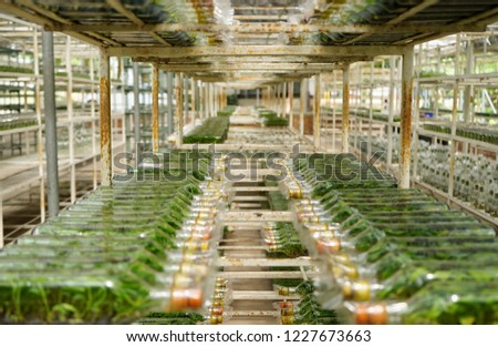 Plant tissue culture bottle Images and Stock Photos - Page