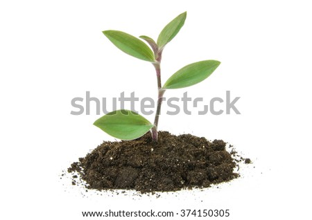 plant tree growing seedling in soil isolated on white background #374150305