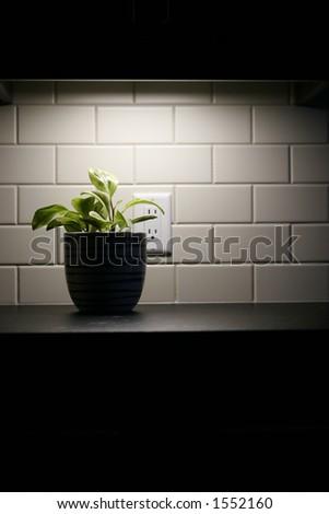 plant under neath lighting