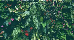 Plant wall with lush green colors, variety plant forest garden on walls orchids various fern leaves jungle palm and flower decorate in the garden rainforest background