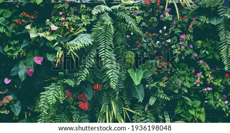 Plant wall with lush green colors, variety plant forest garden on walls orchids various fern leaves jungle palm and flower decorate in the garden rainforest background Stock foto ©