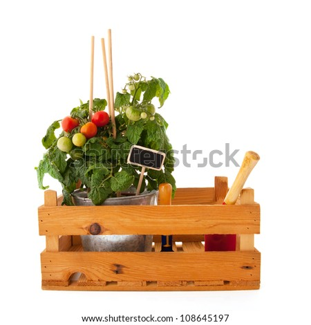 Plant with cherry tomatoes in wooden crate