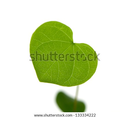 plant with heart shaped leafs isolated on white background