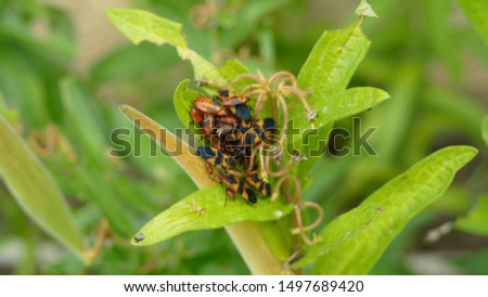 Plant with orange and black bug #1497689420
