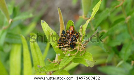 Plant with orange and black bug #1497689432