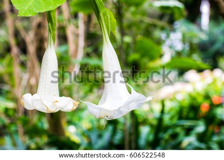 Large white bell shaped flowers gallery flower decoration ideas large white bell shaped flowers choice image flower decoration ideas large white bell shaped flowers choice mightylinksfo