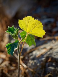Plant with yellow leaf