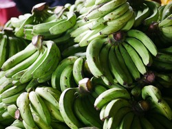Plantain bananas sell at a Indonesia local market. Branch of bananas on market