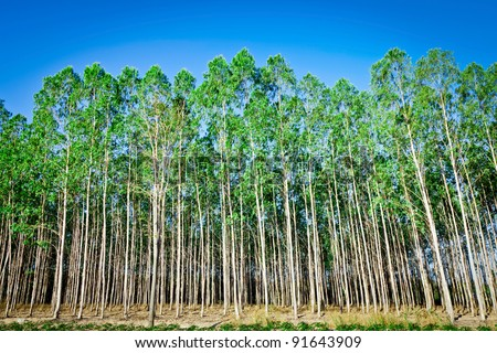 Essay on tree plantation / Hurry This Offer Ends In 3 Hours www ...