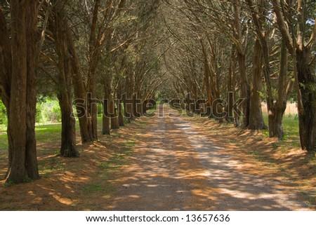 plantation path - stock photo