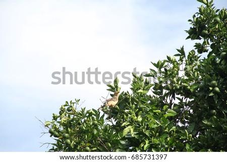 Plantation, plucking, Cassava, farm, Merces, Minas Gerais, Brazil,  Foto stock ©