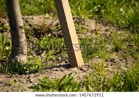 Planted tree with stakes in the ground  is close #1407672911