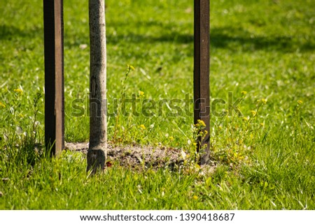 Planted young tree with stakes on grass background is close #1390418687