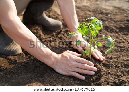planting  - Shutterstock ID 197699615