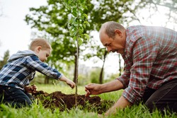 Planting a family tree. Little boy helping his grandfather to plant the tree while working together in the garden. Fun little gardener. Spring concept, nature and care.