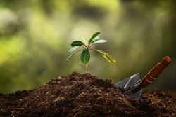 Planting a small plant on a pile of soil on green bokeh background.