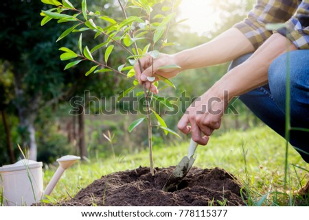 Planting a tree. Close-up on young man planting the tree, then watering the tree. Environment and ecology concept stock photo