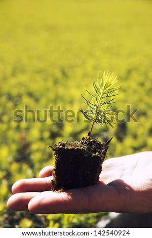 Planting a young tree in the nursery