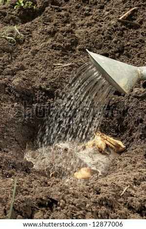 Planting & watering of plants - stock photo