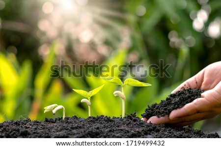 Planting crops on fertile soil and the hands of farmers spinning the soil, including showing the process of plant growth, cropping concepts and investments for farmers.