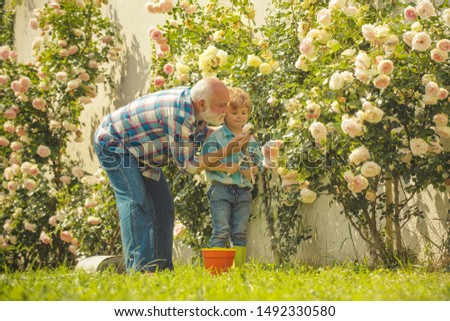 Planting flowers. Grandfather and grandson in beautiful garden. Child are in the garden watering the rose plants. Happy gardeners with spring flowers