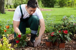 Planting flowers in a beautiful green garden