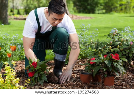 Planting flowers in a beautiful green garden