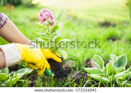 Planting Flowers in a garden #573316045
