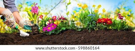 Planting flowers in sunny garden #598860164
