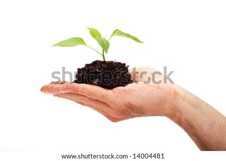 Planting fresh green to save environment