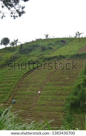 Planting in paddy fields that are steeply sloping in Tawangmangu, a cool area on the western slope of Mount Lawu which is a mainstay of natural tourism in Solo with its beautiful green scenery soothin