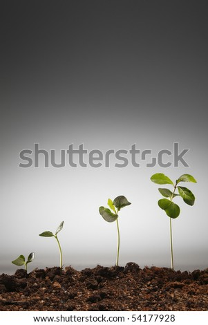 planting is growing from small to big - stock photo
