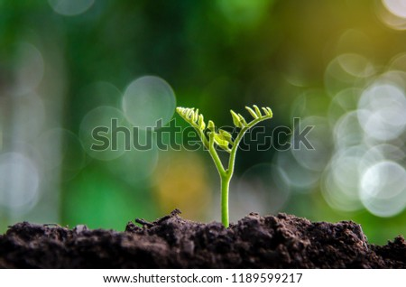 Planting seedlings young plant in the morning light on nature background #1189599217
