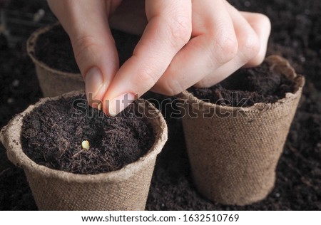 Photo of  Planting seeds in the spring.The seeds in my hand against the soil.
