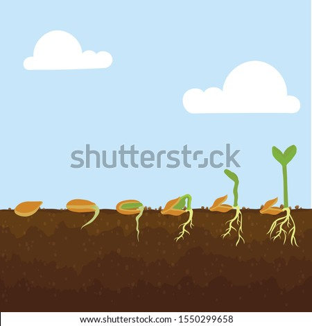 Planting seeds with growing seeds
