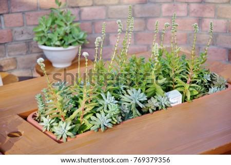 Planting succulent plants #769379356