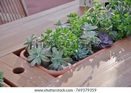 Planting succulent plants #769379359