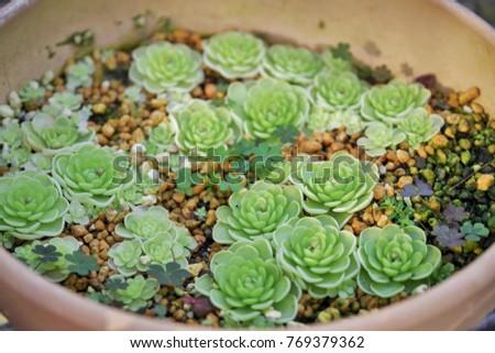 Planting succulent plants #769379362