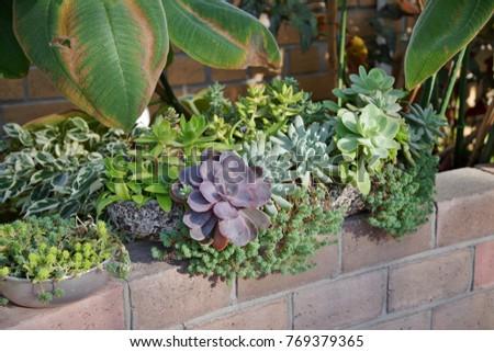 Planting succulent plants #769379365