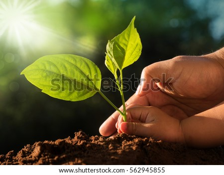 Planting together concept. Kid and father hands planting young tree over green background and sunlight in morning time