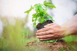Planting trees, papaya trees, long-stemmed green plants to protect against global warming, volunteering.