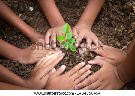 Planting trees, planting hands, planting trees, planting soil, saving earth and reducing global warming.