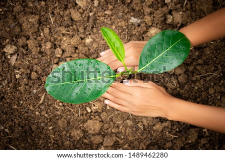 Planting trees, planting hands, planting trees, planting soil, saving earth and reducing global warming. #1489462280