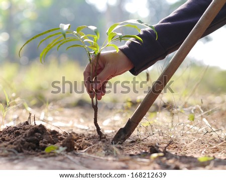 planting trees to save the world.
